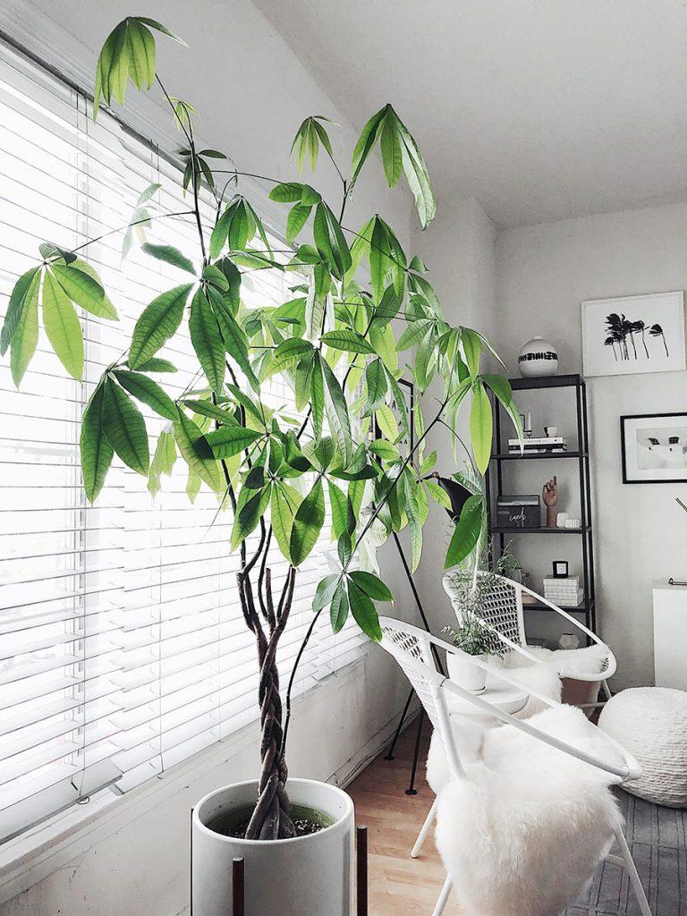 money tree living room